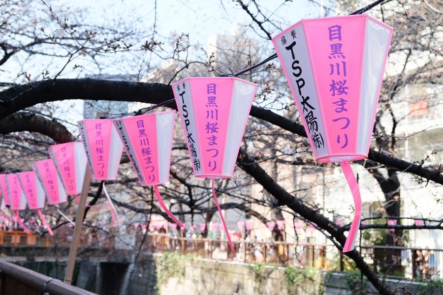 First Cherry Blossoms inNakameguro