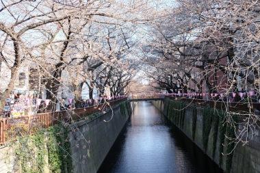 Nakameguro Tokyo sakura-3