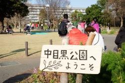 Nakameguro Tokyo sakura-5