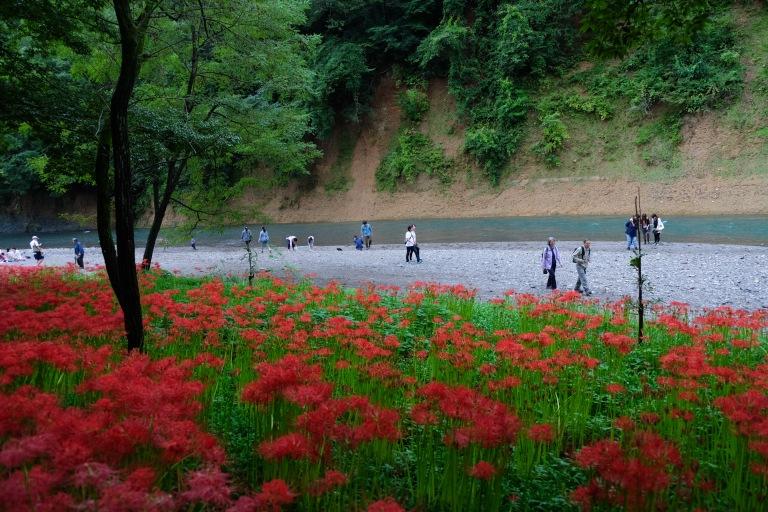 spider-lily-saitama-japan-flowers-sightseeing-7