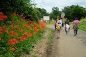 spider-lily-saitama-japan-flowers-sightseeing