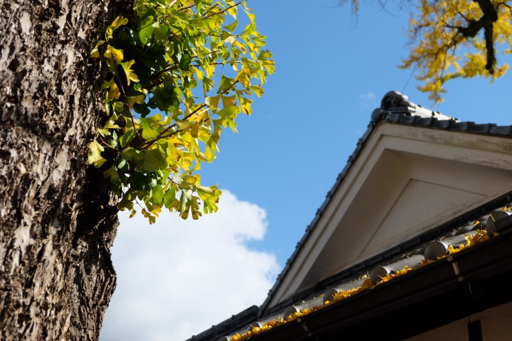 arita-autumn-leaves-japan-sightseeing-4