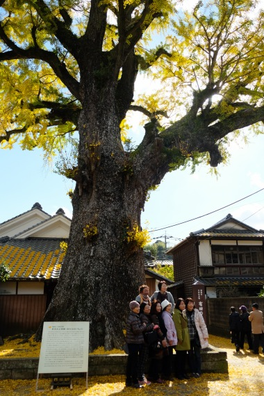arita-autumn-leaves-japan-sightseeing-5