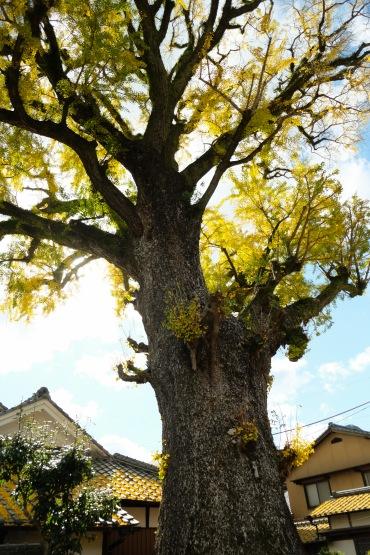 arita-autumn-leaves-japan-sightseeing-6