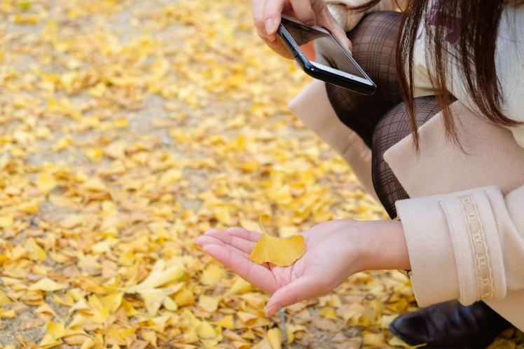 arita-autumn-leaves-japan-sightseeing-7
