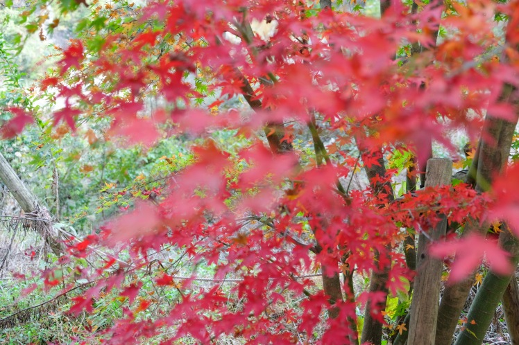 arita-autumn-leaves-japan-sightseeing-9