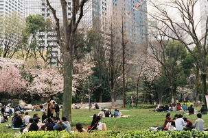 Analogue Photography Tokyo Shinjuku Sakura-11