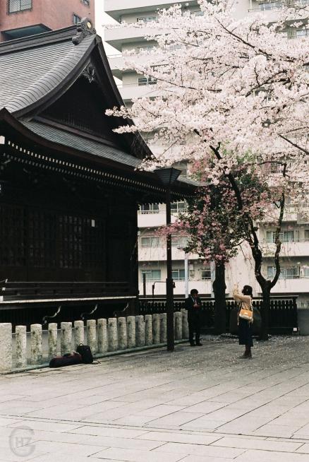 Analogue Photography Tokyo Shinjuku Sakura-14