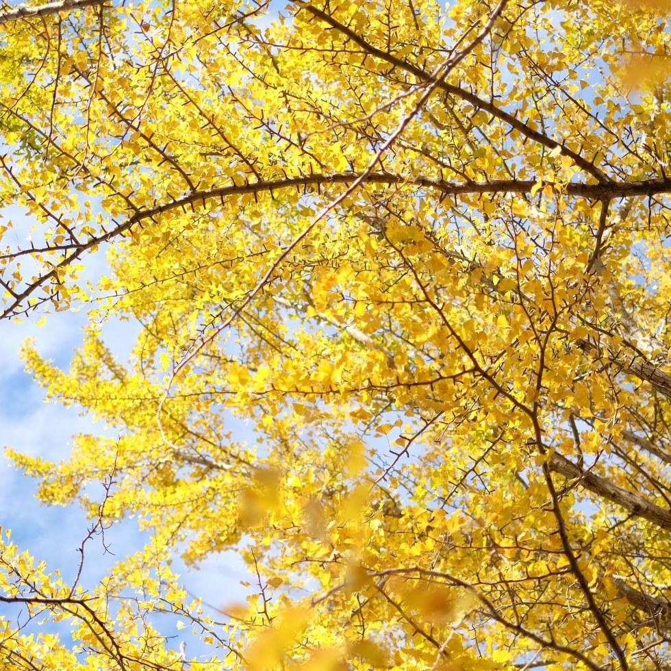 Colorful autumn leaves Japan Showa Kinen Koen photography