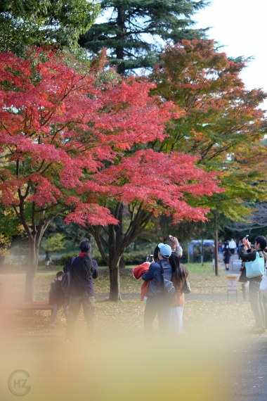 Colorful autumn leaves Japan Showa Kinen Koen photography