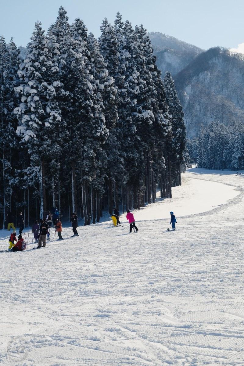 Der perfekte Snowboardurlaub in Japan