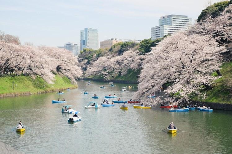 Chidorigafuchi Tokyo Sakura cherry blossoms boats