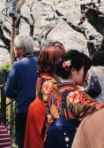 Chidorigafuchi Tokyo Sakura Kirschblüten Kimono