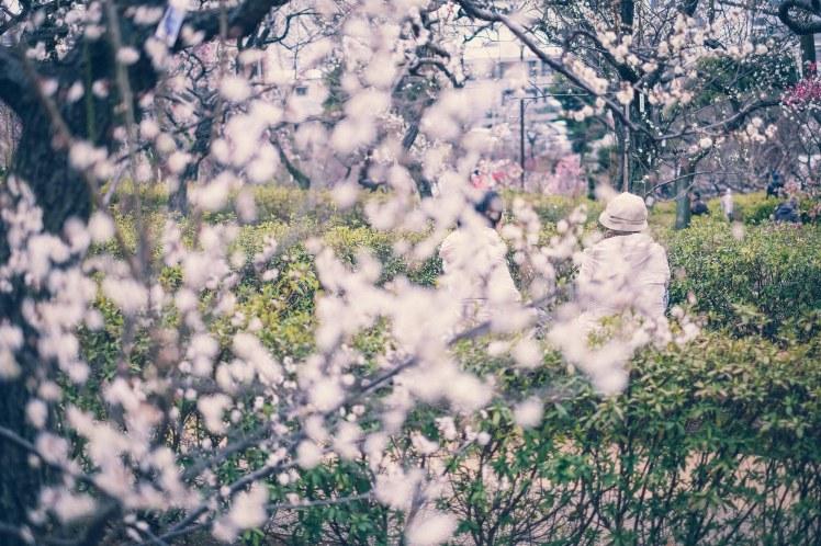 Setagaya Tokyo plum blossoms spring